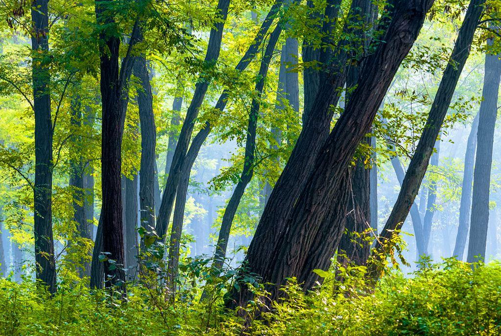 孙子故里森林公园