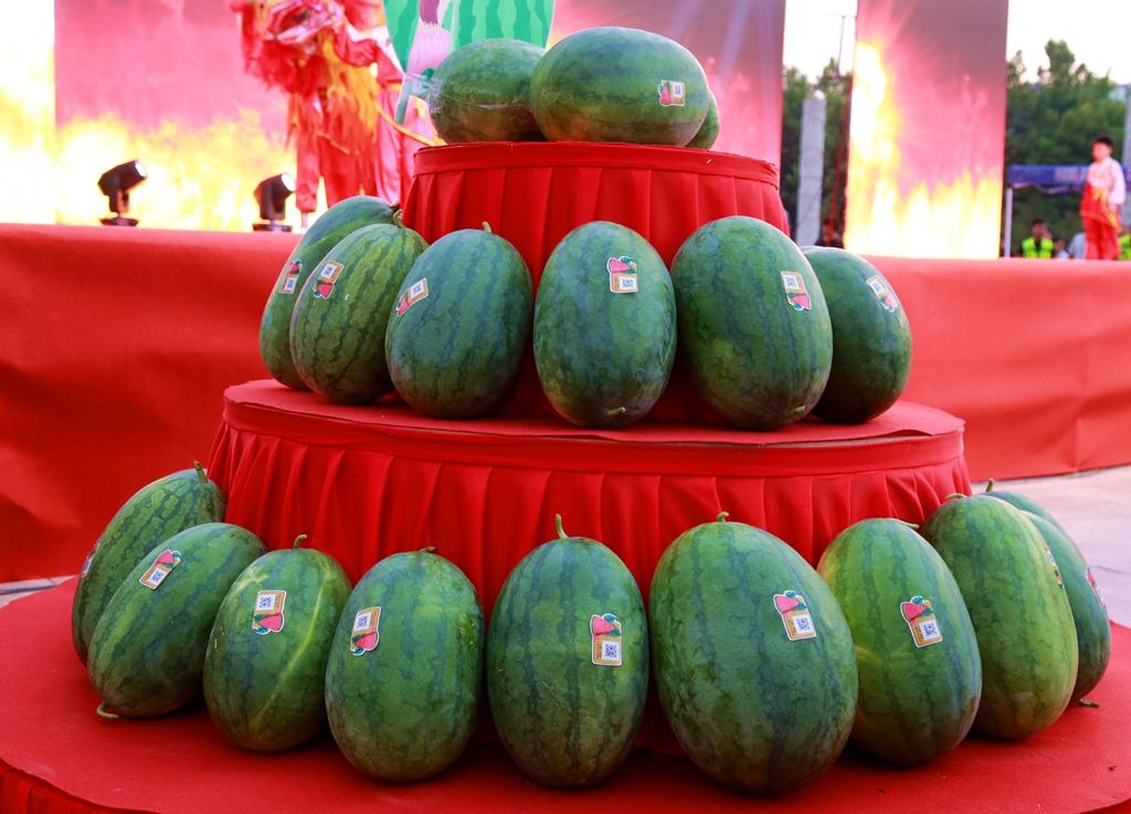 鄄城引马首届西瓜节