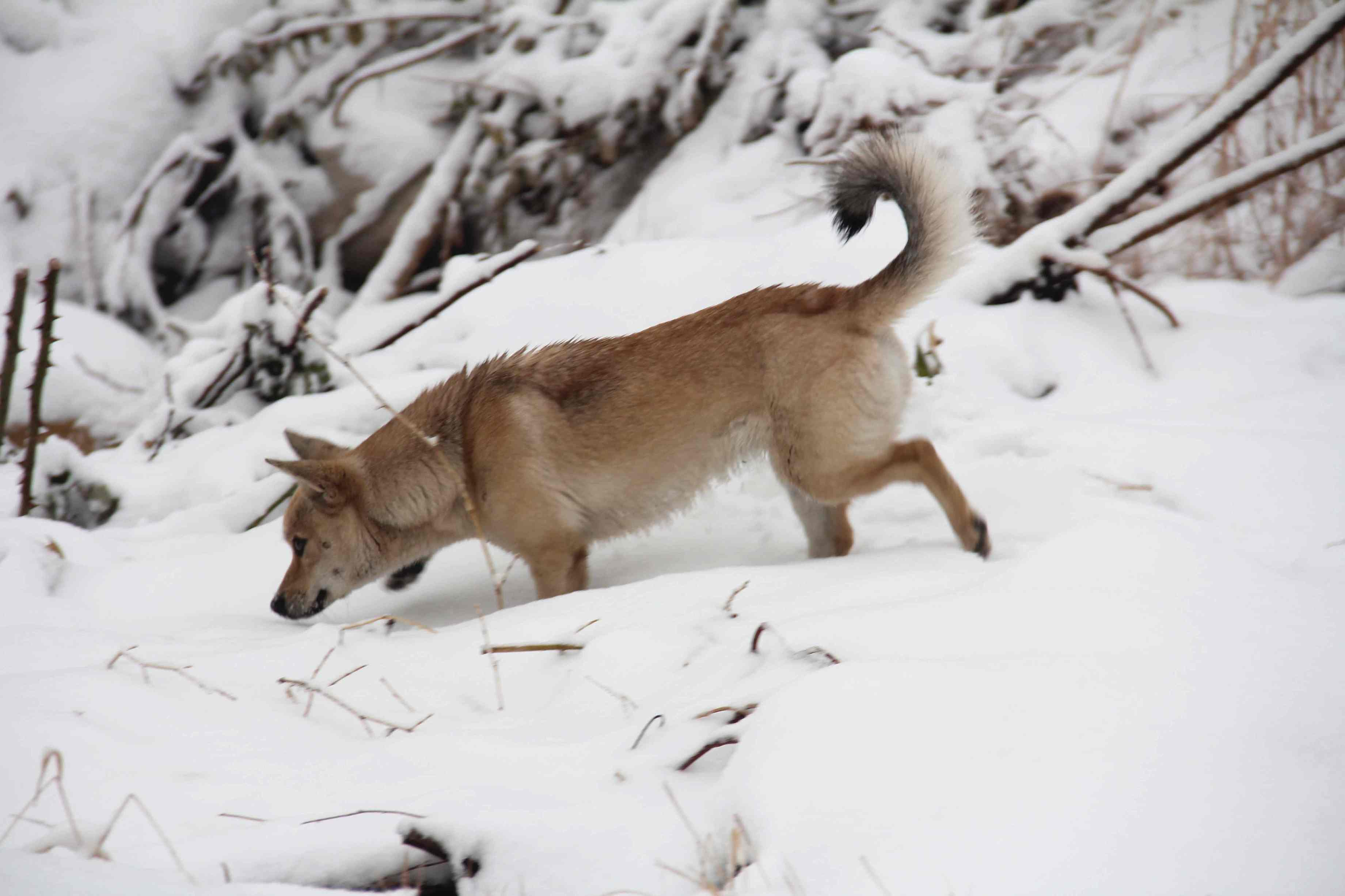 雪地压成动物图片