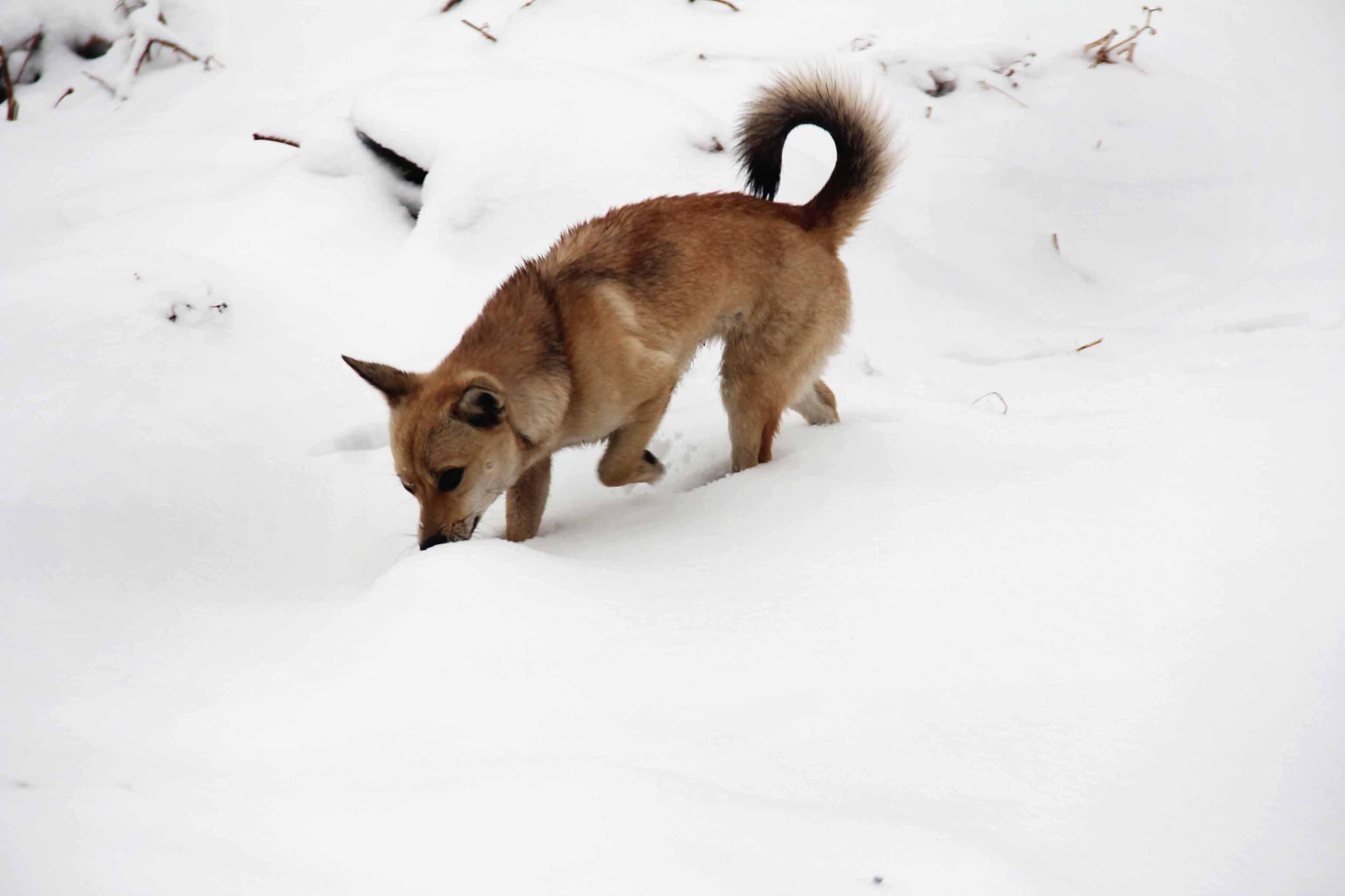 雪地简笔画动物