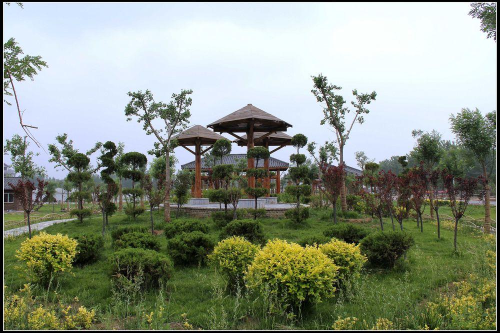 马里奥���g�l%9�m:,~Z�Y_夏津黄河故道森林公园椹果园,温泉度假村