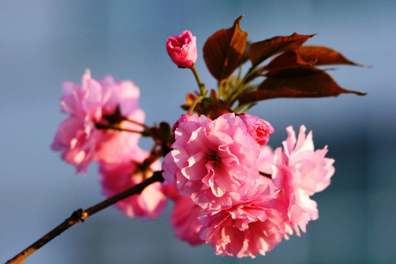 百花齐放春满园