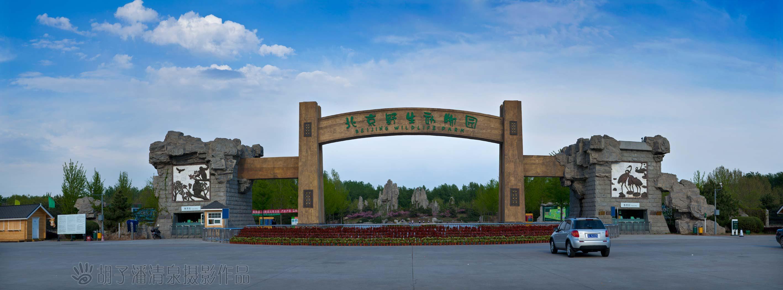 北京野生动物园随拍 胡子潘清泉 - 潍坊市摄协官方