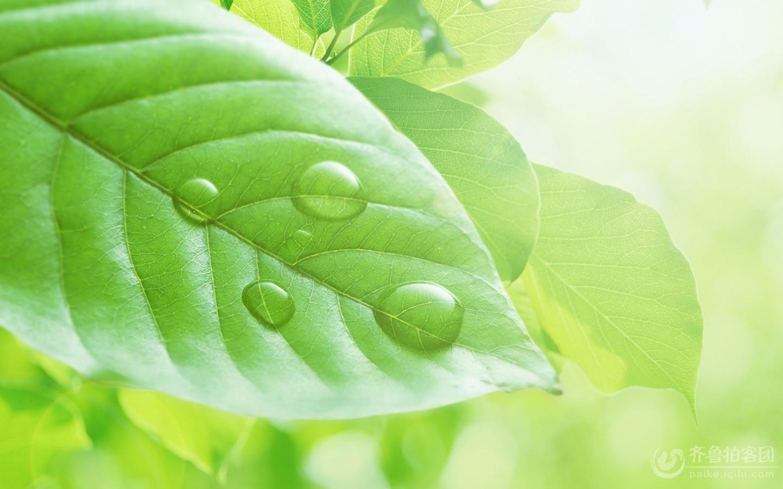 背景 壁纸 绿色 绿叶 树叶 植物 桌面 1440_900