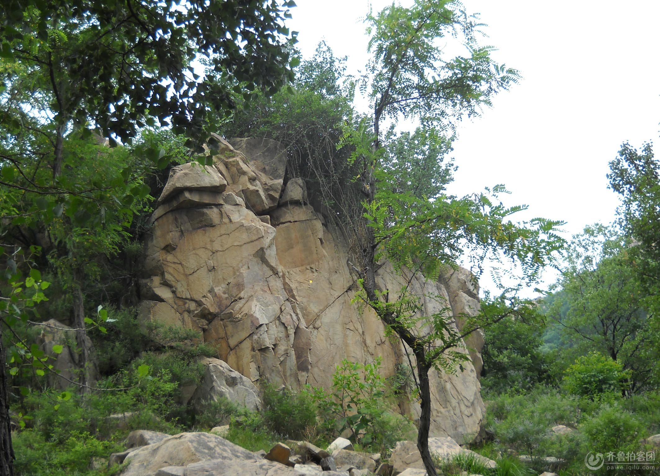 隐云山的奇石怪树 - 济宁拍客 - 齐鲁社区 - 山东最大