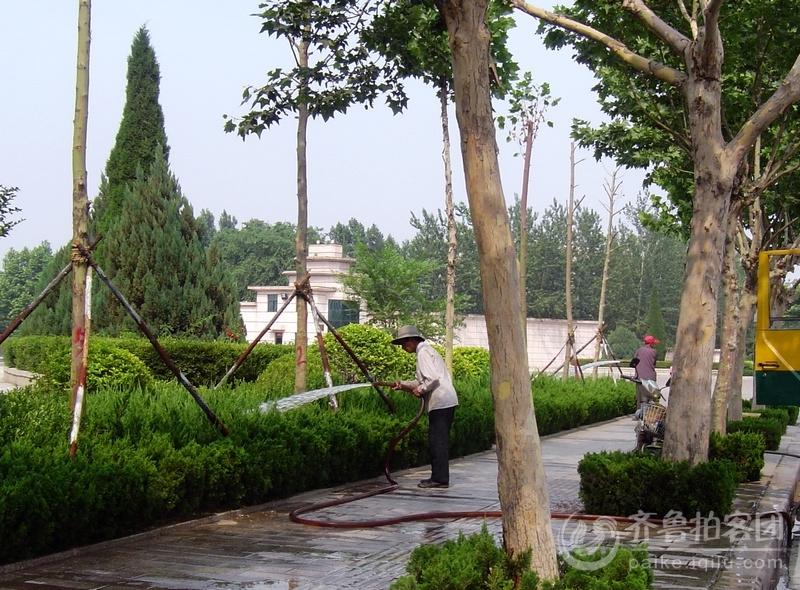潍坊城区加大对绿化带树木的灌溉力度