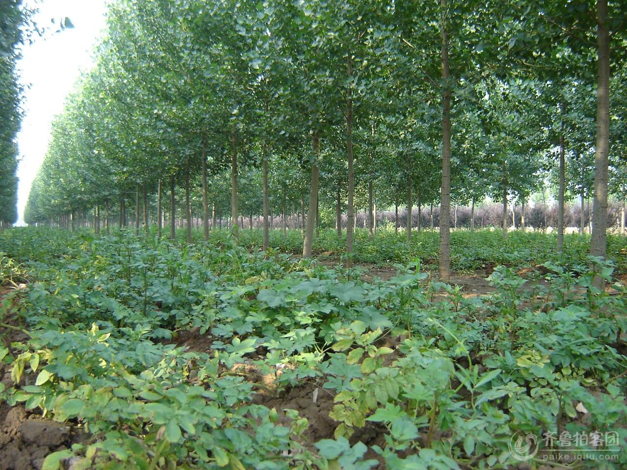林下经济_...河南 安徽考察林下经济发展情况的报告 -学习交流