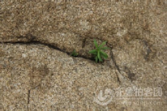 顽强的生命力--------石缝中的小草