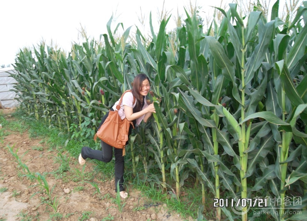 美女偷玉米 潍坊拍客