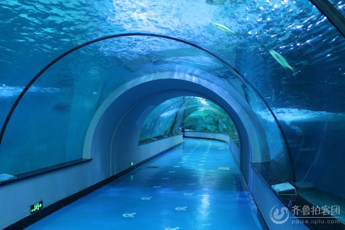 壁纸 海底 海底世界 海洋馆 水族馆 1111_741