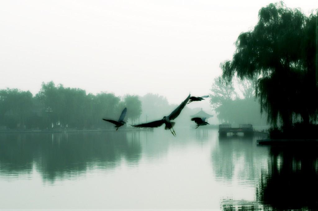 清晨的明湖.jpg