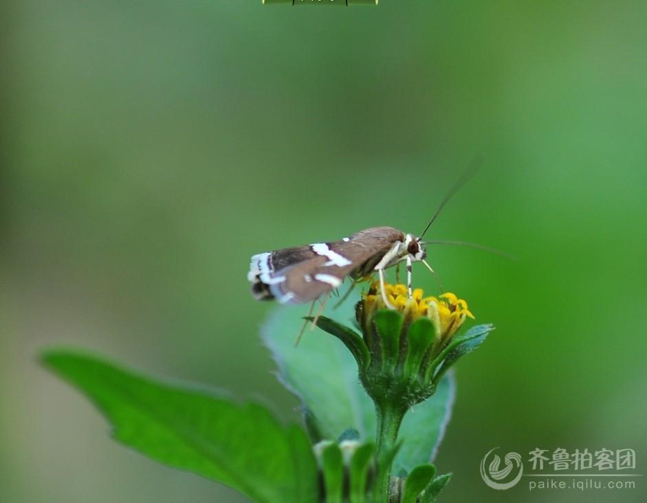 秋天的昆虫