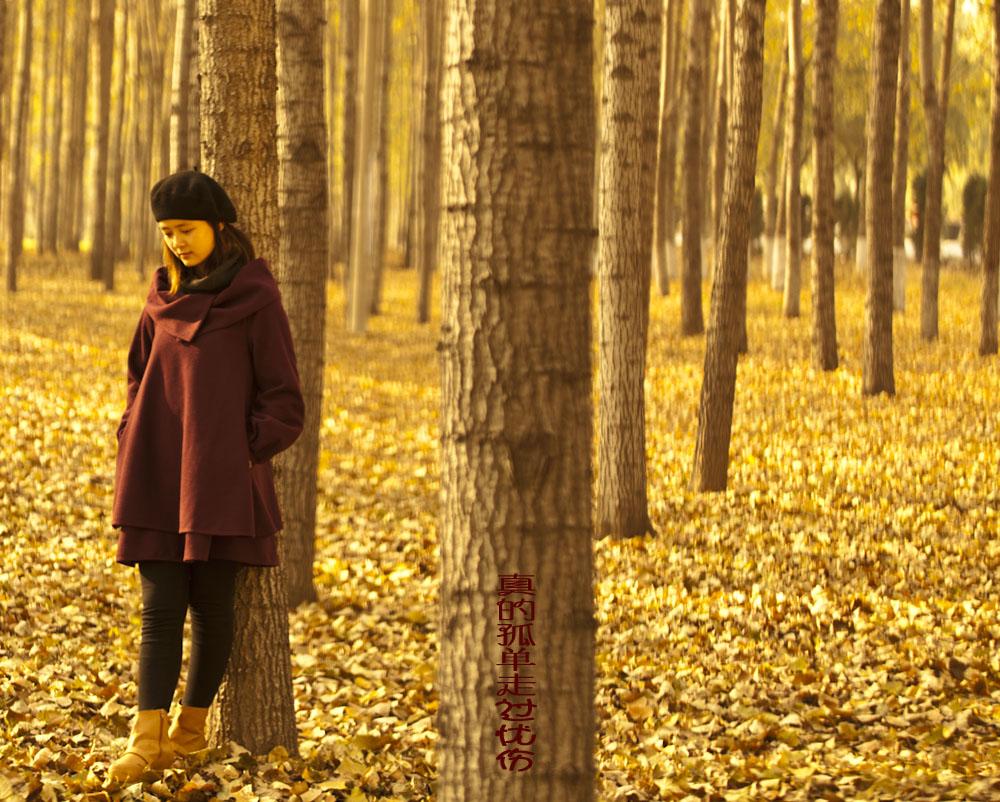 向往阳光的秋天树林