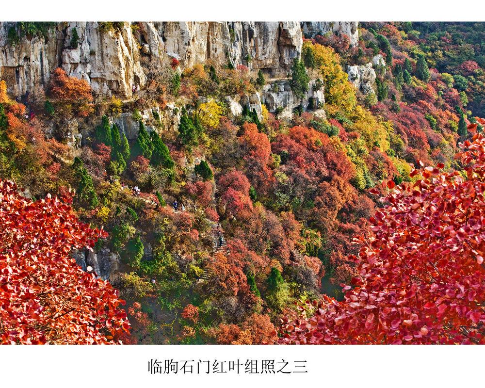 nEO_IMG_临朐石门红叶组照之三.jpg