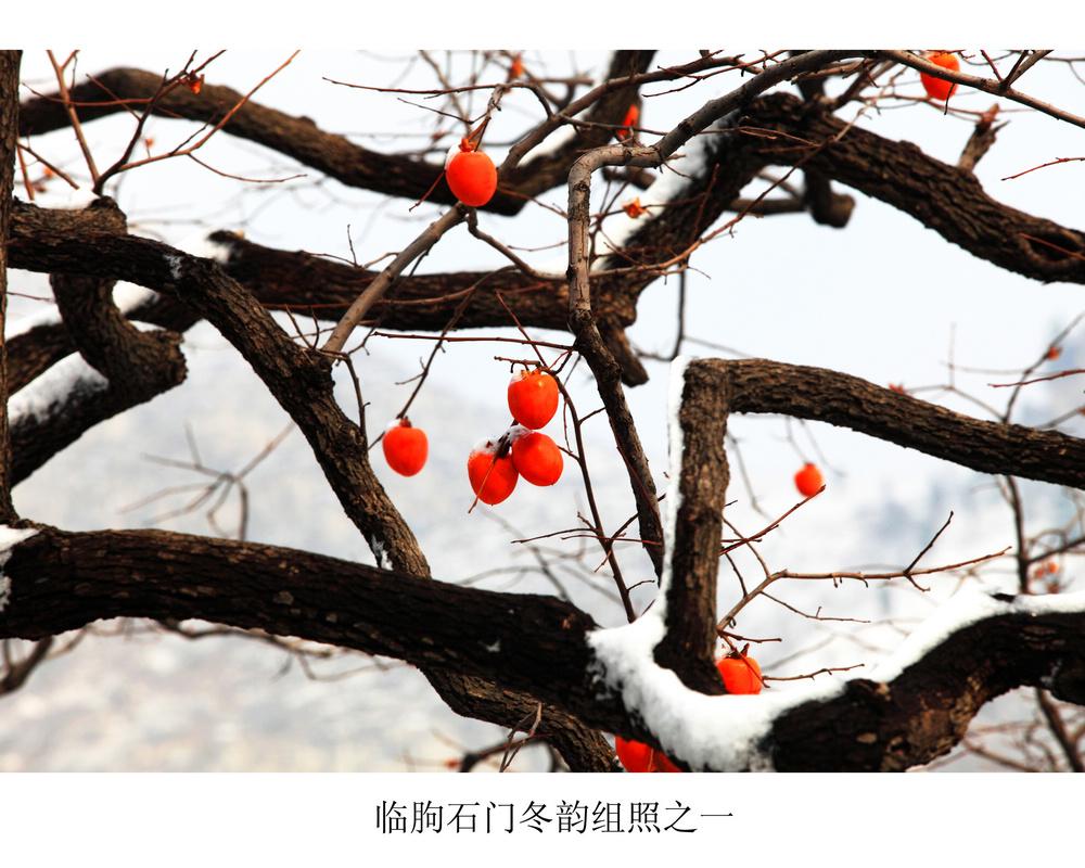nEO_IMG_临朐石门冬韵组照之一.jpg