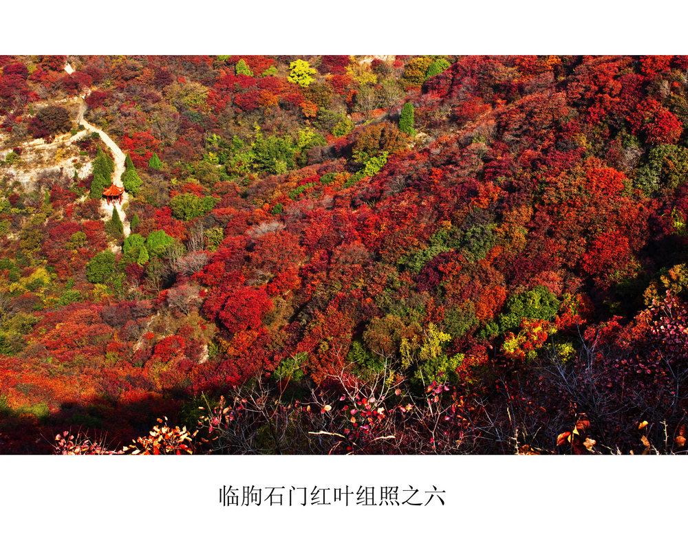 nEO_IMG_临朐石门红叶组照之六.jpg