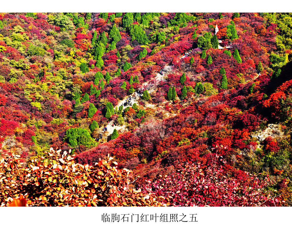 nEO_IMG_临朐石门红叶组照之五.jpg