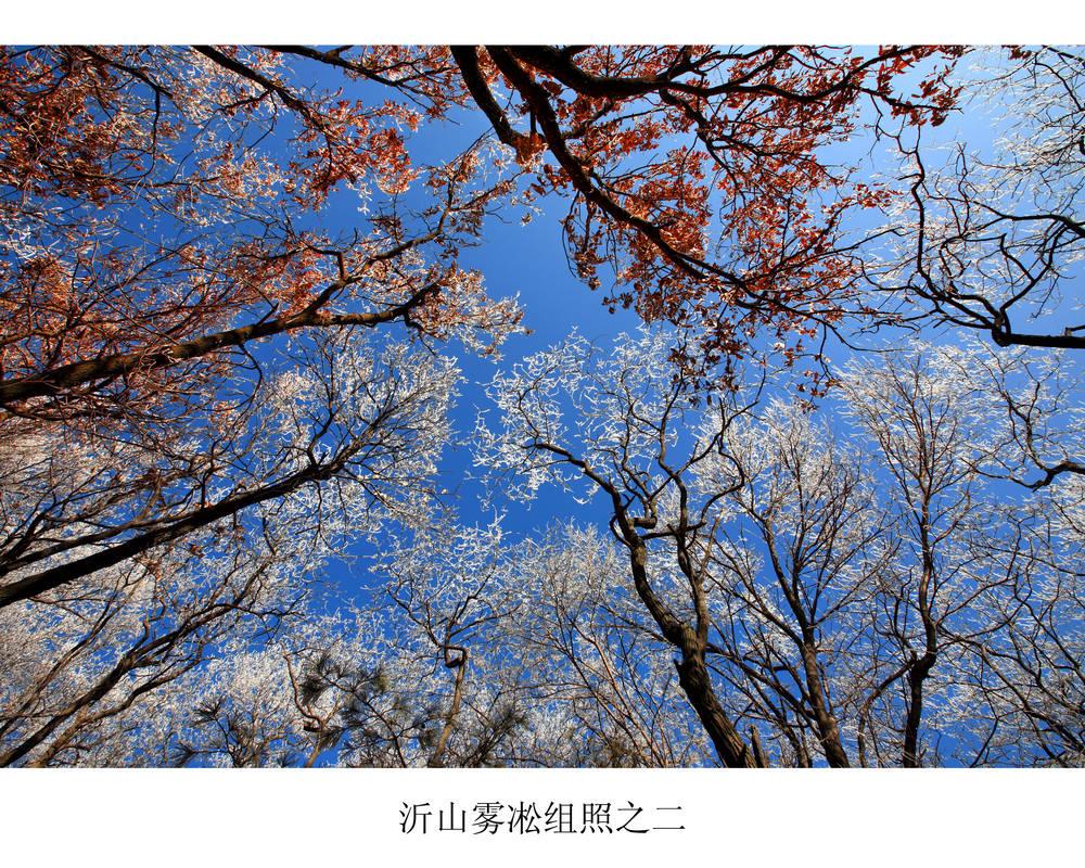 nEO_IMG_沂山雾凇组照之二.jpg