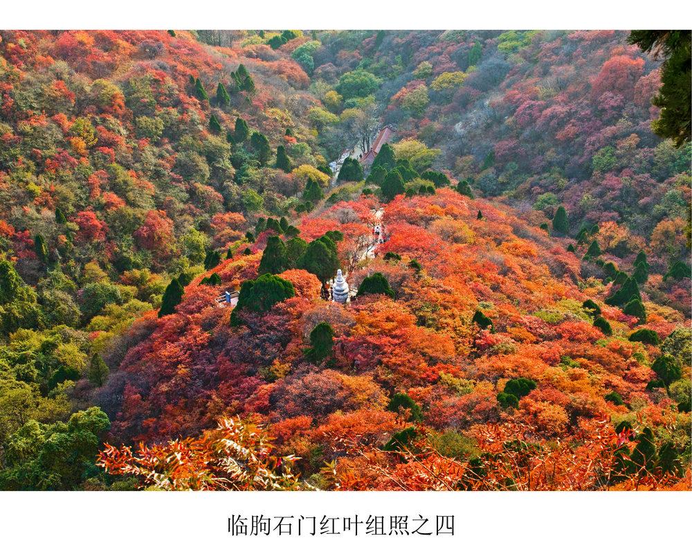 nEO_IMG_临朐石门红叶组照之四.jpg