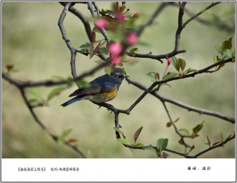 《雷峰塔前的鸟儿》.jpg