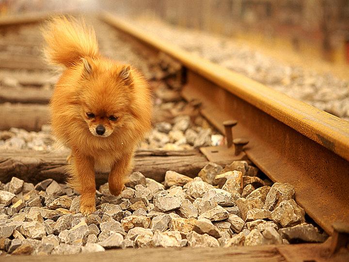 《铁轨上的小狗》.jpg