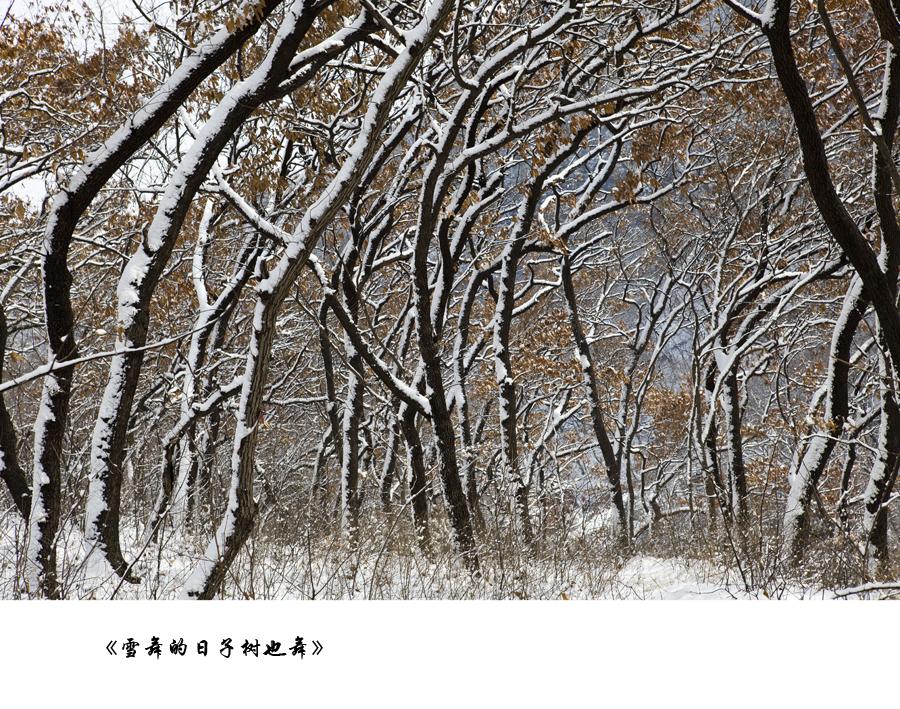《雪舞的日子树也舞》.jpg