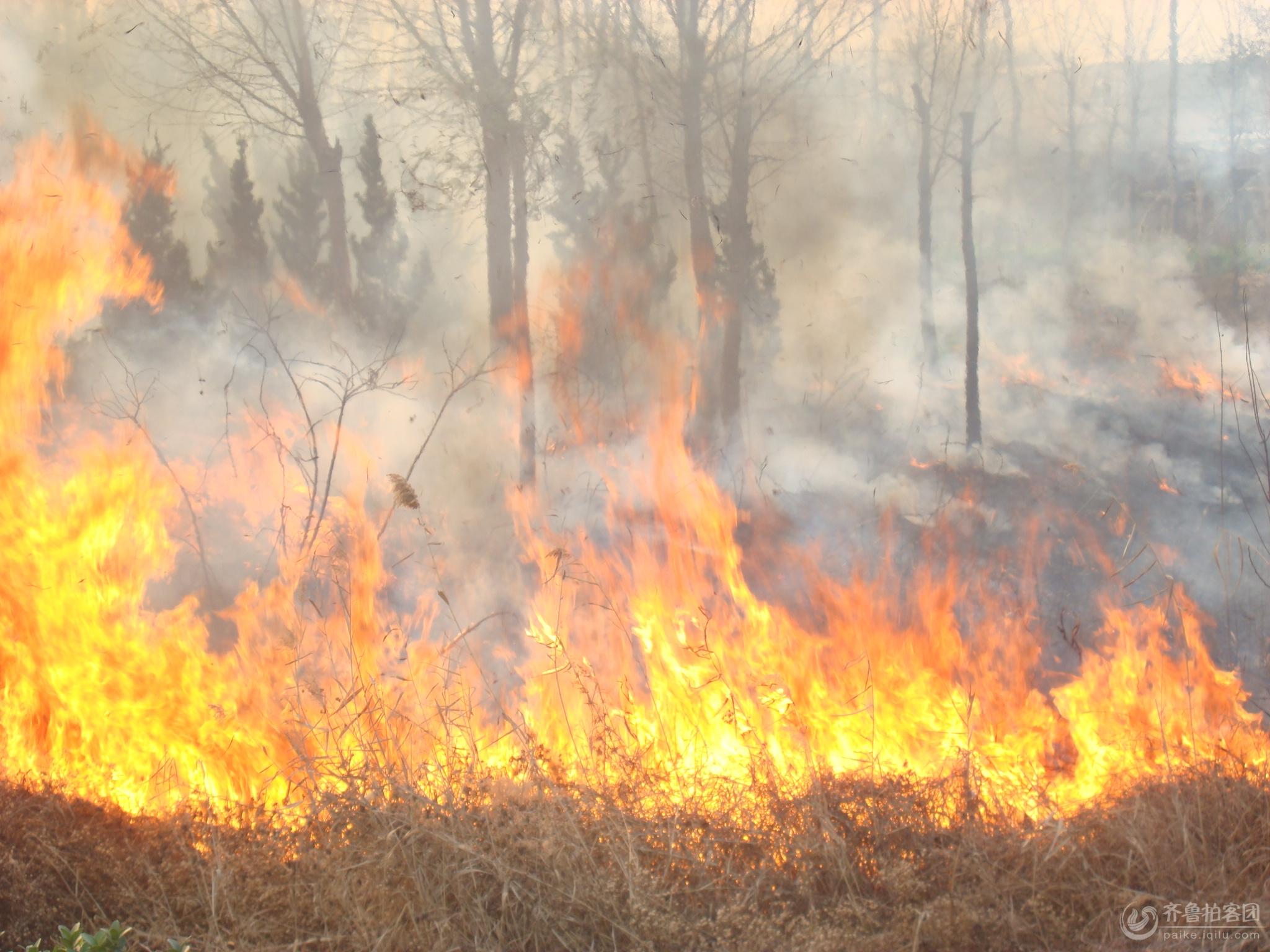 今天一场大火将县城幸福河的绿化带引燃,一片片低矮的灌木丛被烧得稀稀疏疏,有些树枝被烧断,树皮被烧成木炭。燃烧过的地方一片狼藉。看到这种场景确实让人心疼。火灾的原因可能是有人焚烧沟中的杂草,导致火势蔓延到了绿化带。冬季各种树木已经落叶,杂草已经枯萎,稍不注意就可能引发火灾。