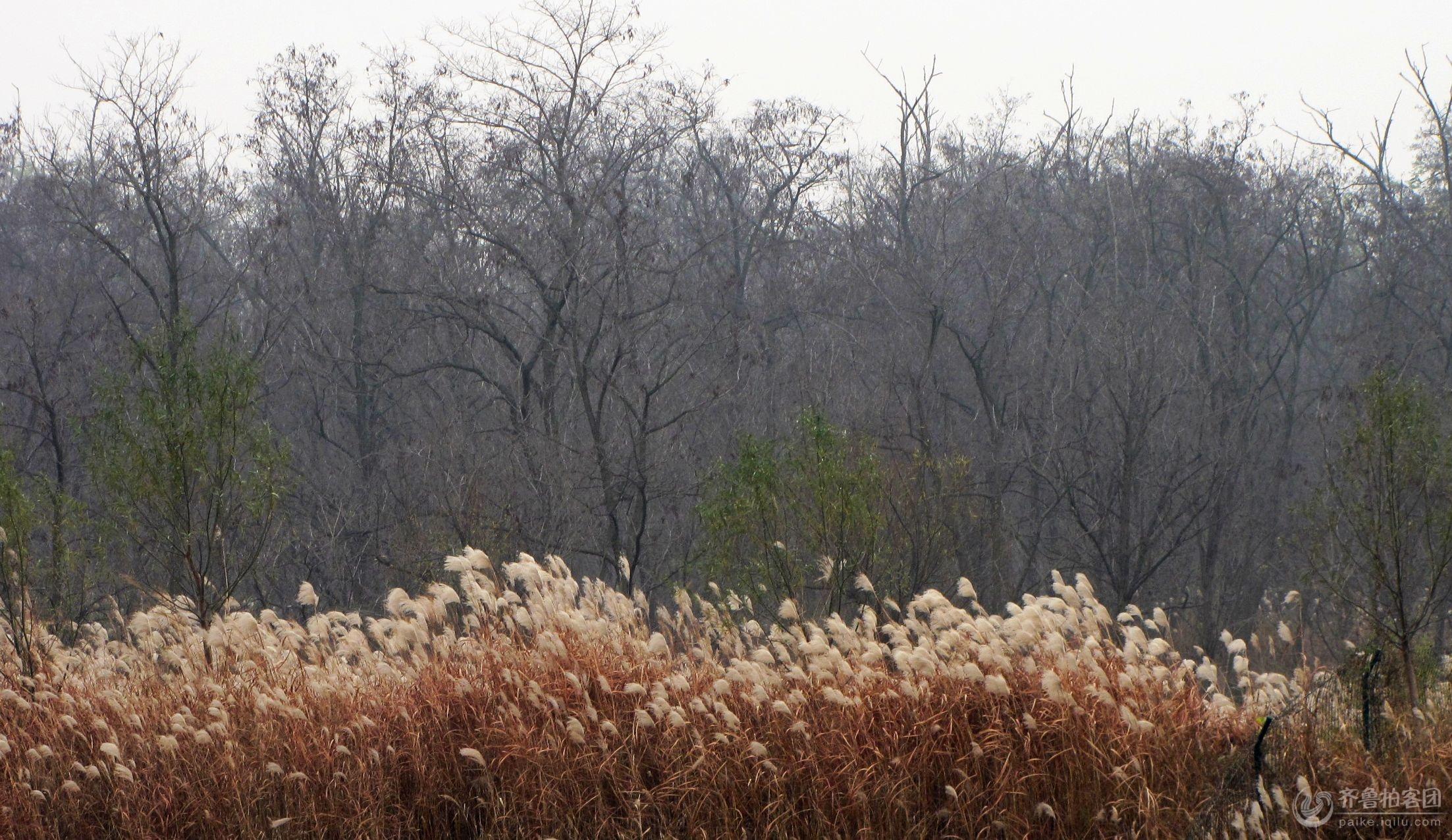 冬来草木枯