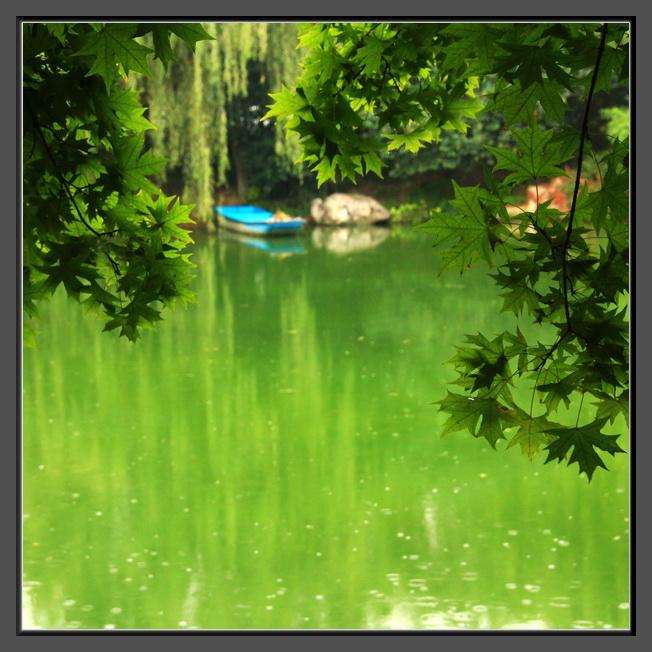 小雨池塘边图片