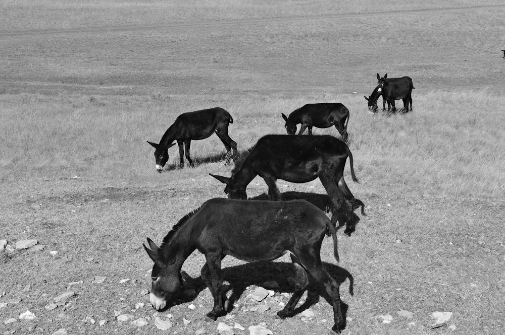 微信头像动物驴