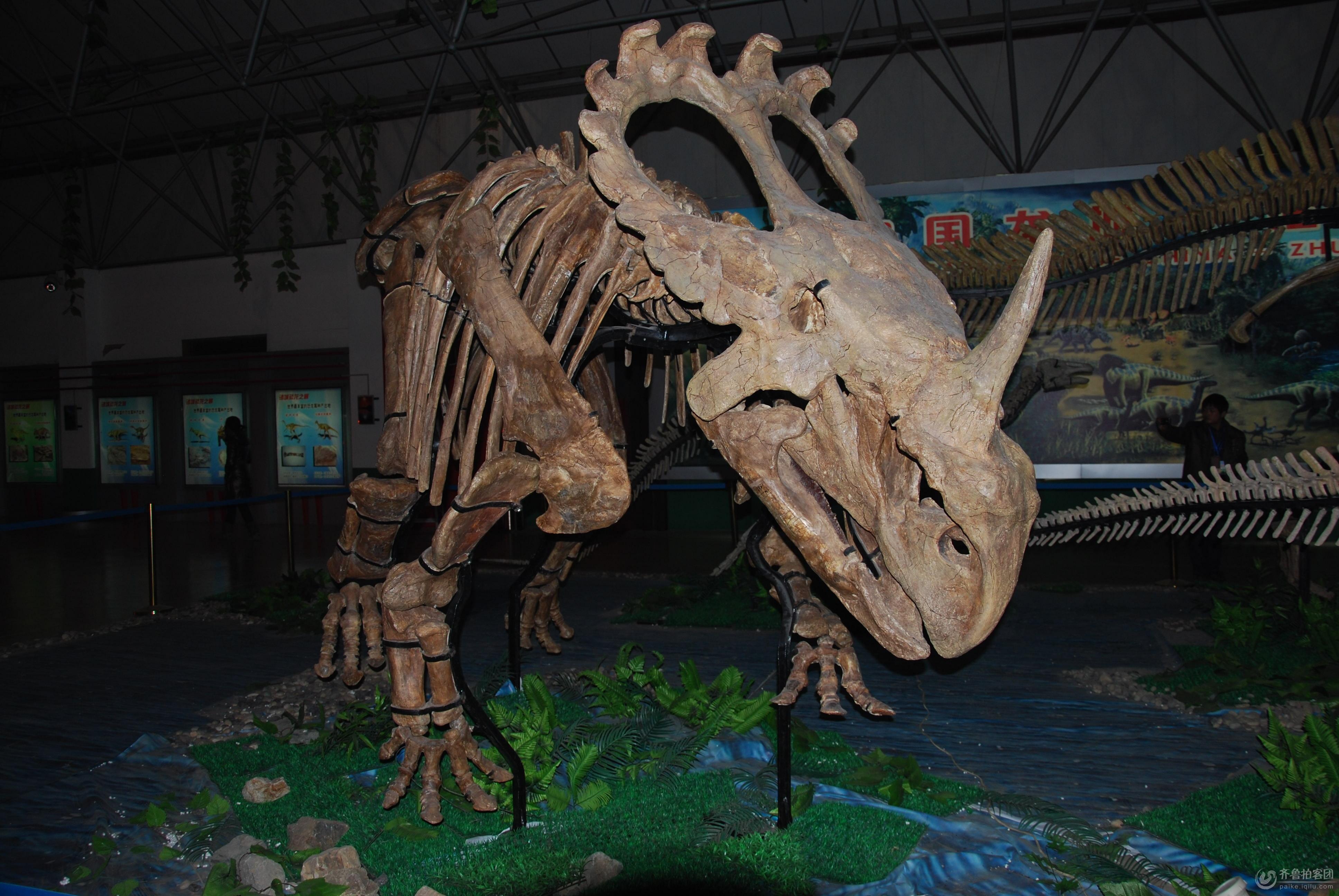 中国恐龙之乡 中国龙城 山东诸城 恐龙化石展