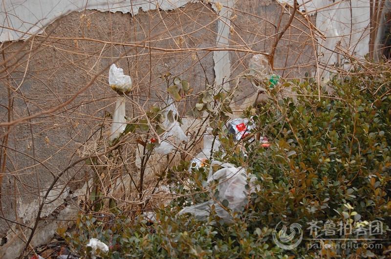 圾袋 昭示院内处处盛开