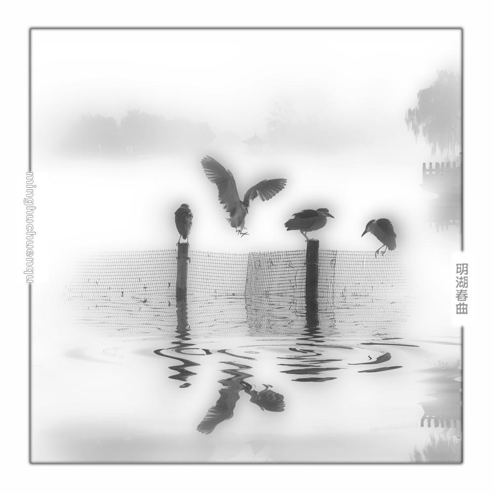 大明湖.jpg