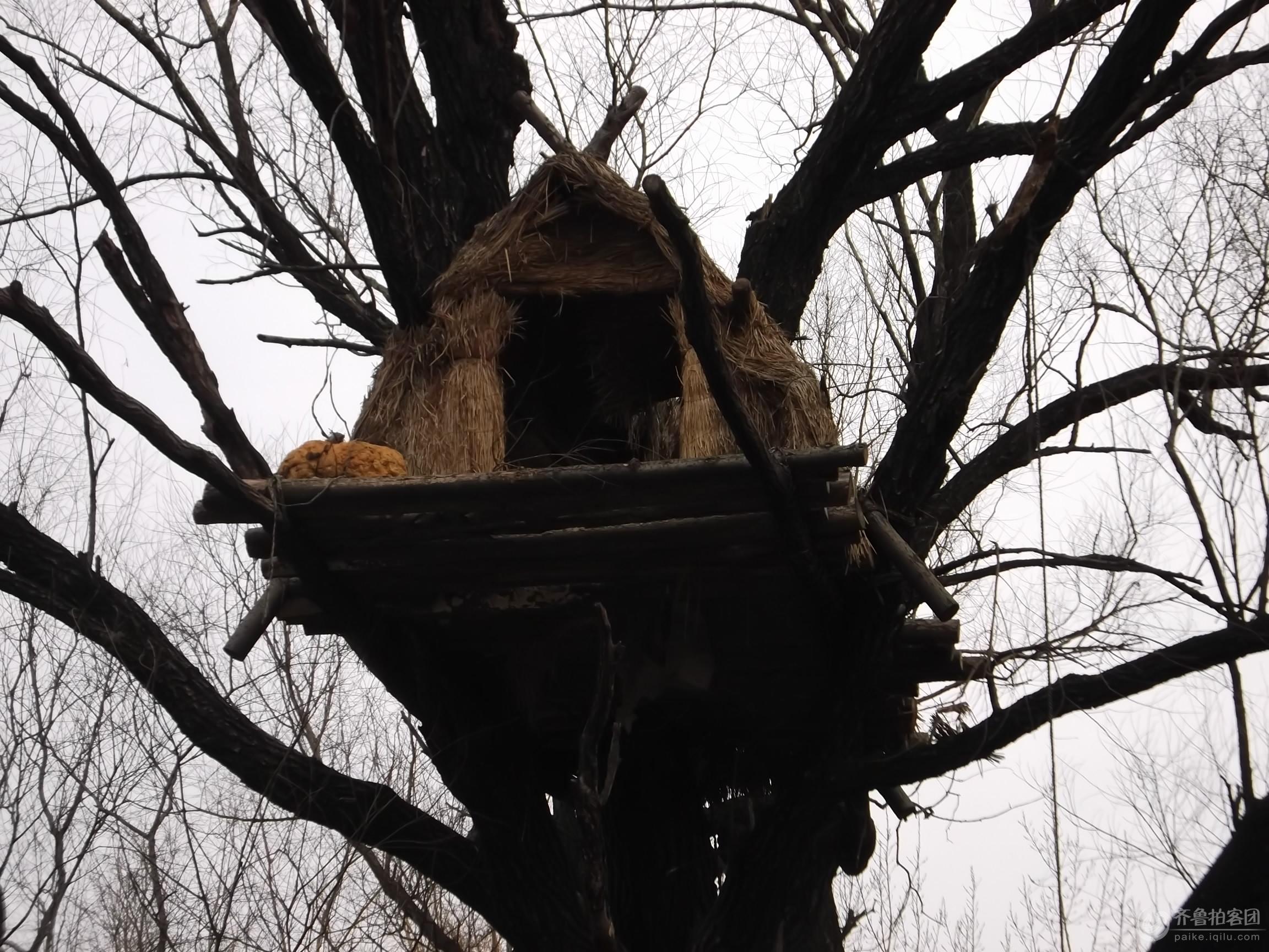 建在树上的房子(景点) - 潍坊拍客 - 齐鲁社区 - 山东最大的城市生活社区,山东广播电视台官方社区!