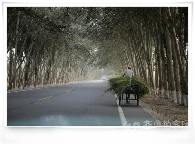 白杨树搭建的宽阔走廊