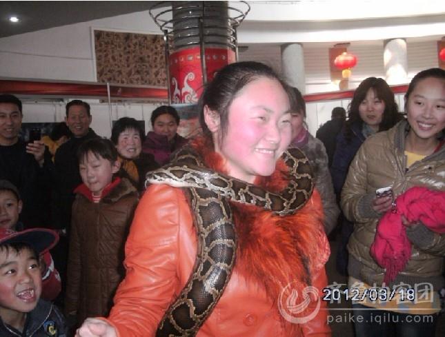 美女与恐怖蟒蛇 烟台拍客