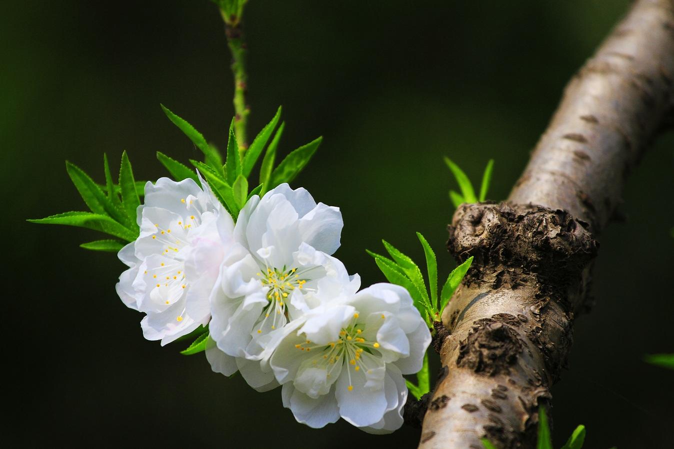 花卉 163gs.jpg