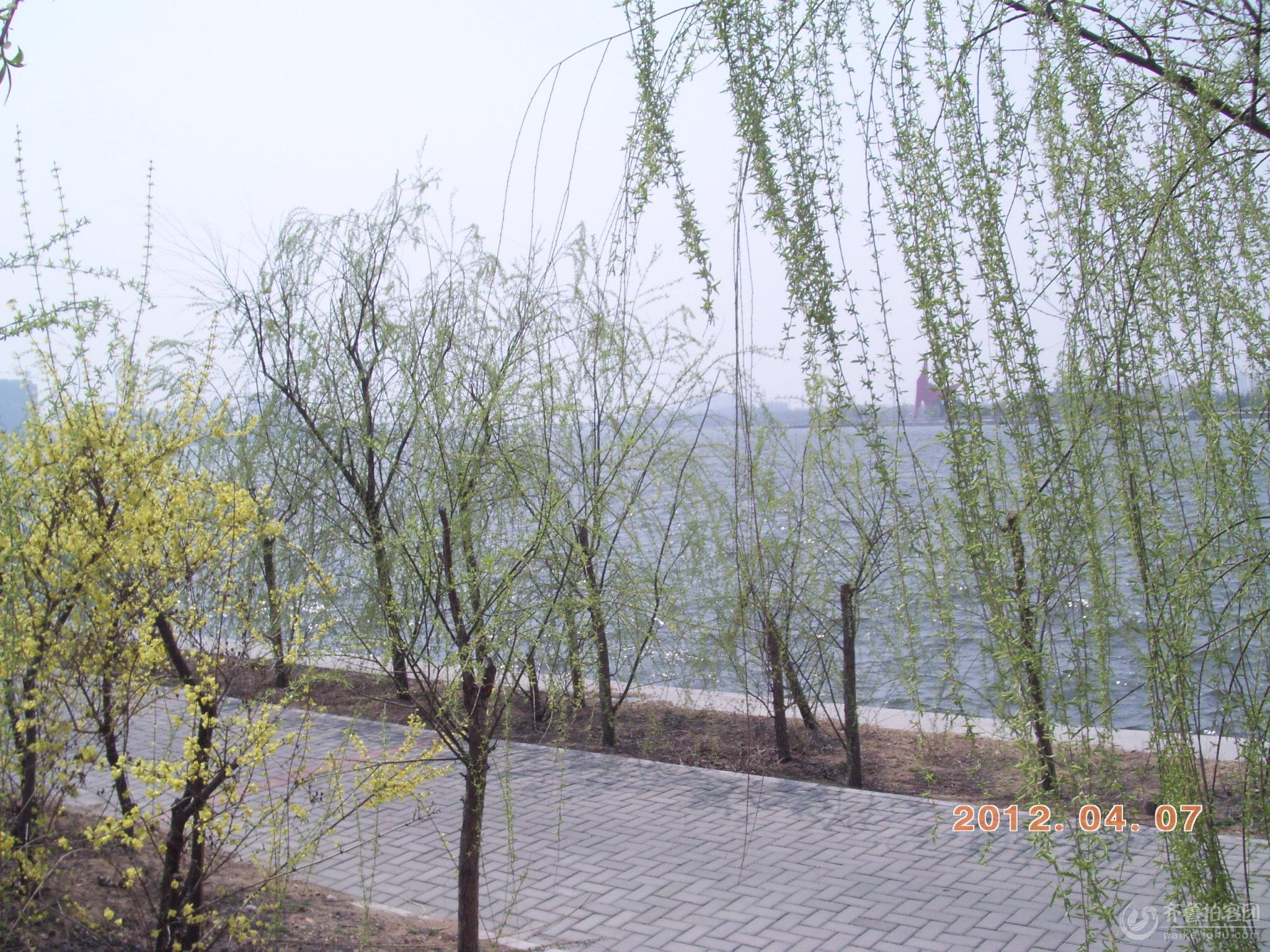 【印象春天】三拍潍河春景图