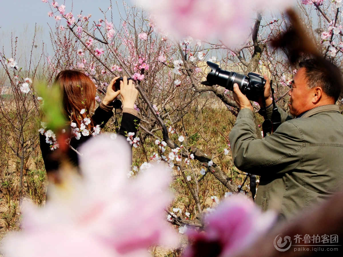 nEO_IMG_梅园芬芳绽和谐2012东阿梅园精选 张志栋 (7).jpg