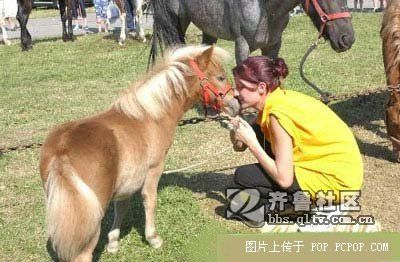 世界上最小最可爱的马