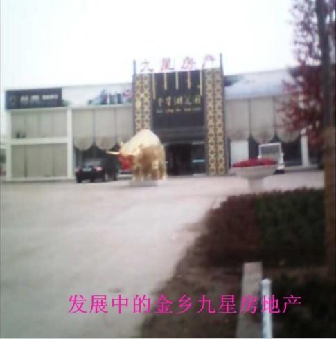 齐鲁网济宁拍客团金乡站团长 -游京 山东最大的城市生活社区,山东广