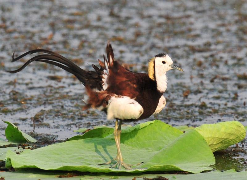 动物 昆虫 鸟 鸟类