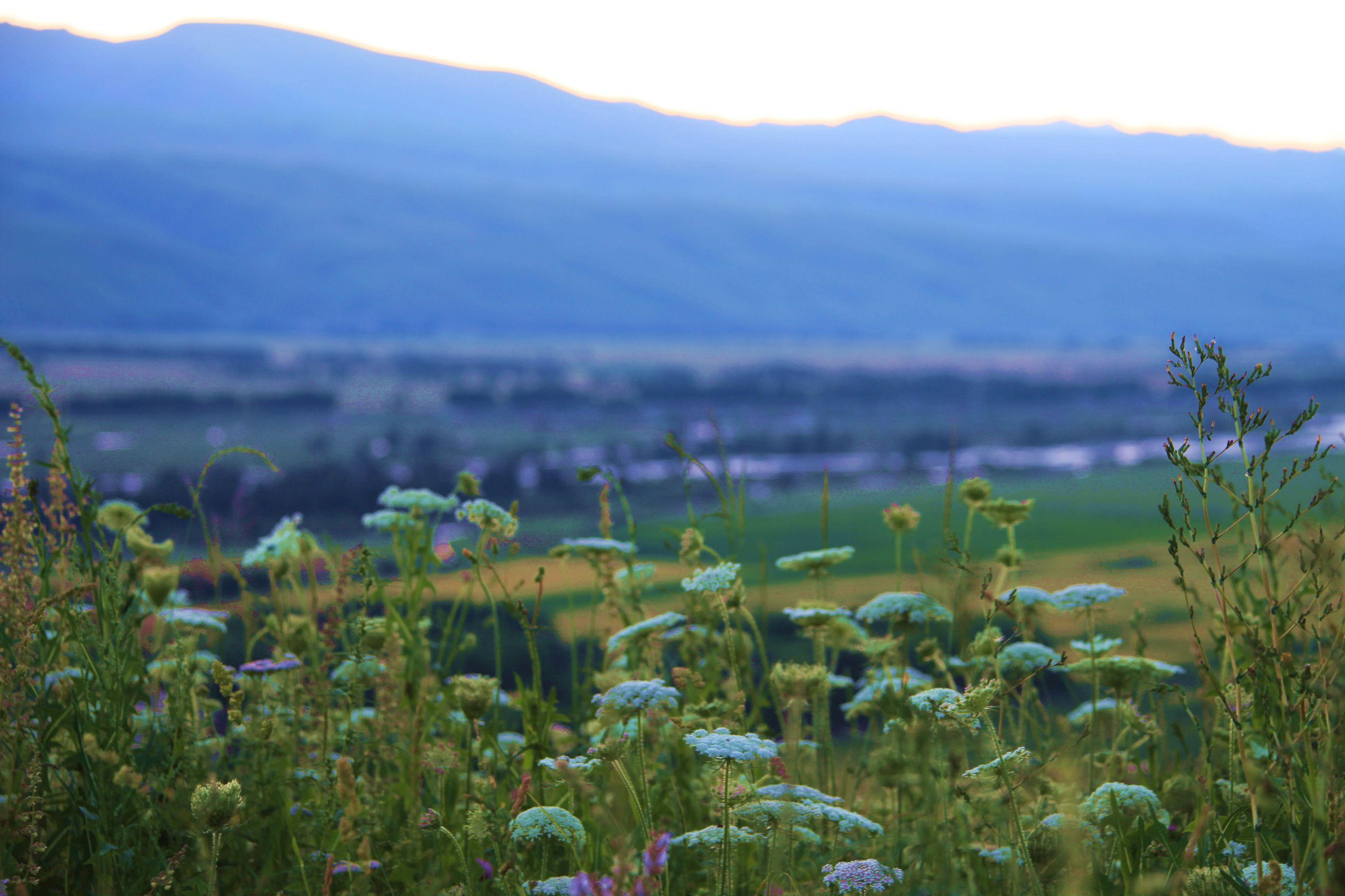 新疆那拉提草原风光 高清图片