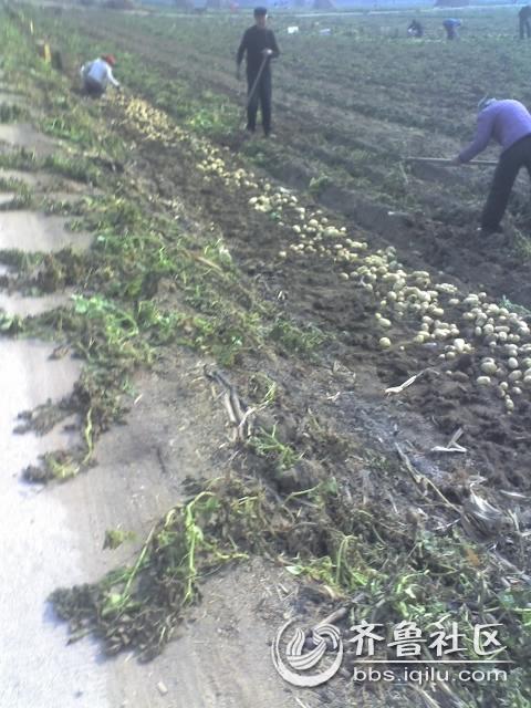 看苗头 今年秋季农业作物又是大丰收