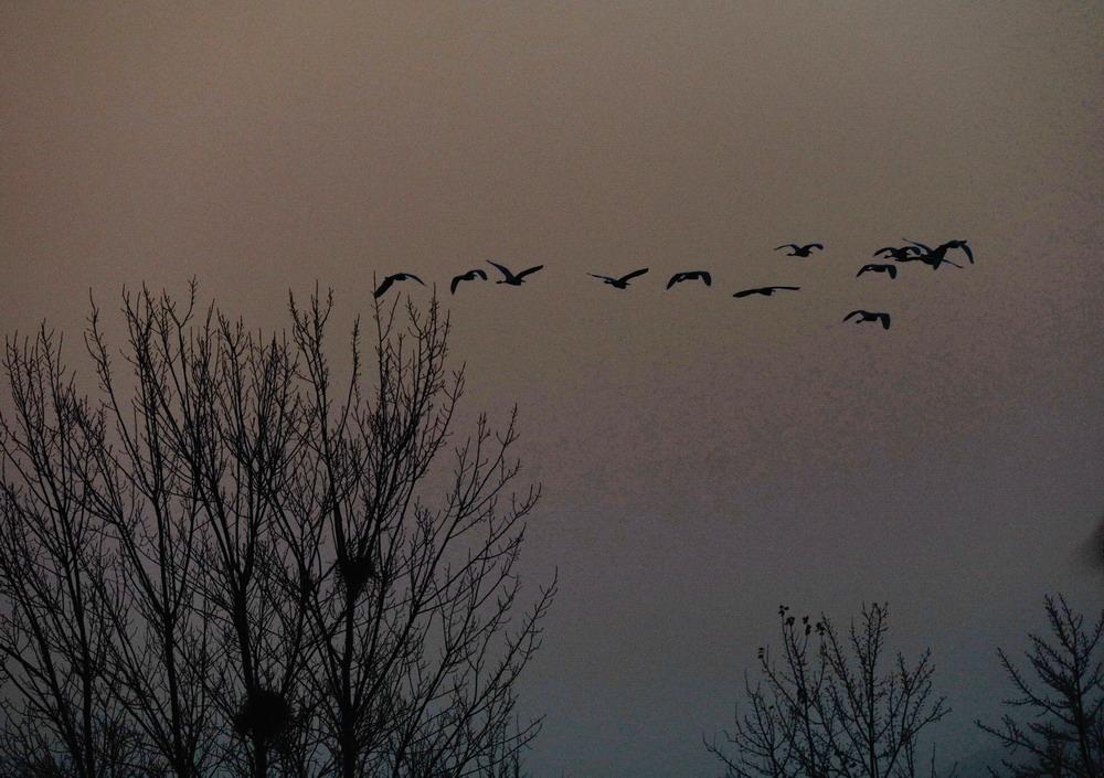 一群大雁往南飞 一群大雁往南飞简笔画 儿童画大雁往南飞-秋天的大雁图片