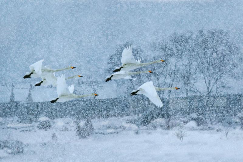 雪中天使.jpg