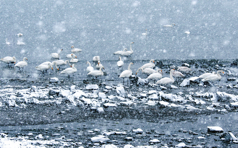 天鹅湖4.jpg