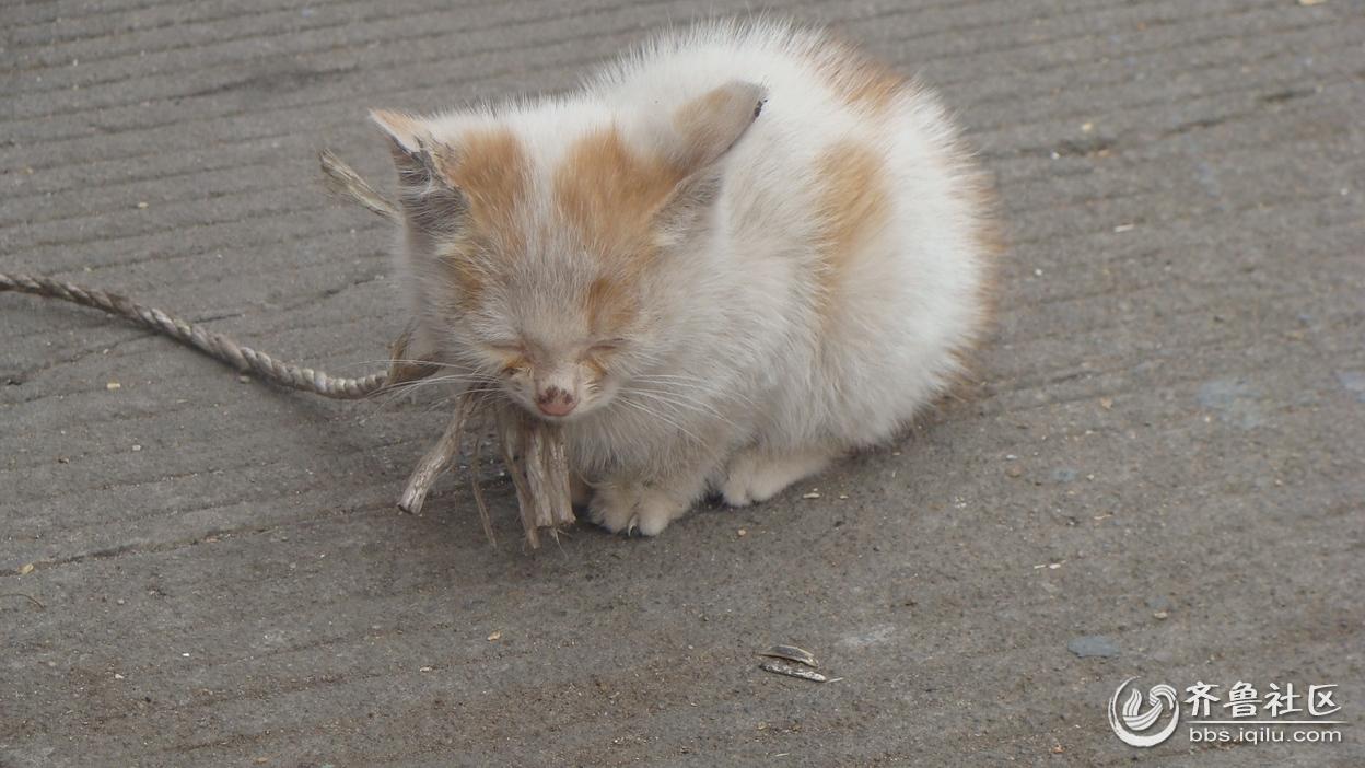 可怜的小猫咪