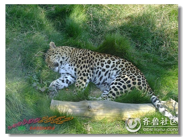 【好客山东】+烟台南山公园动物园