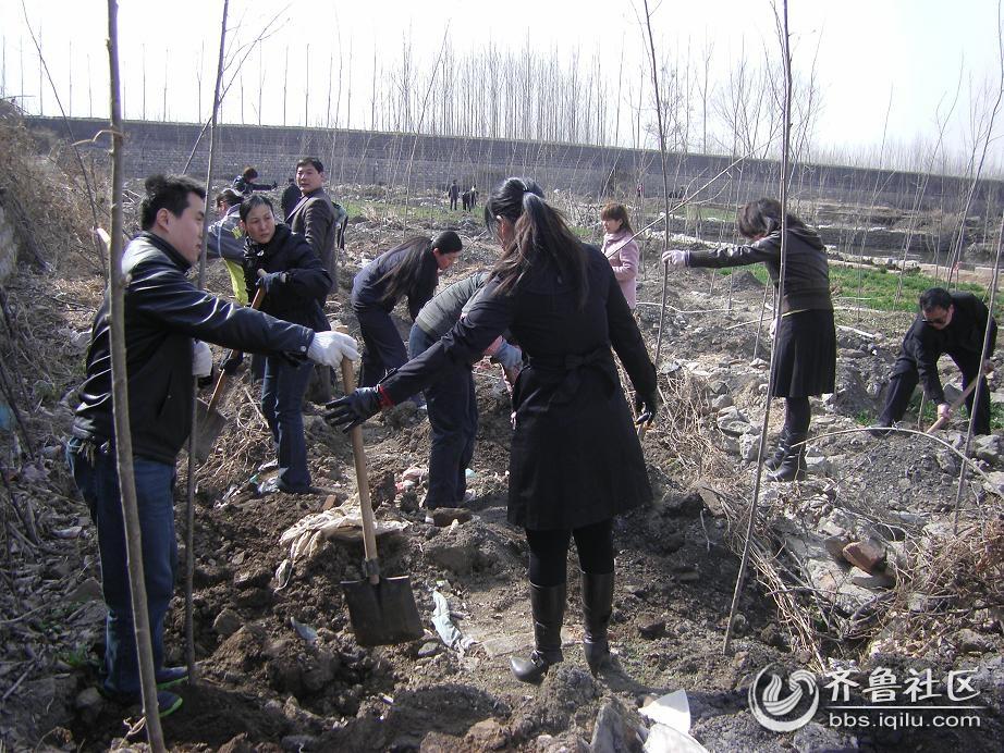 陶阳矿医院职工积极参加社区植树活动